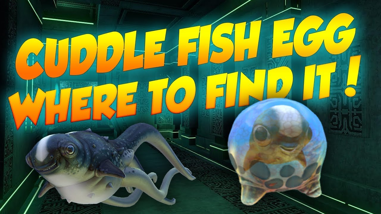 Huge name changes cuddle fish where to find it in for Where to buy fish