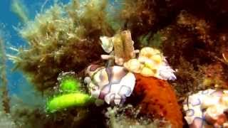 a short documentary about Crustaceans & their hosts Canon S100 in Ikelite housing