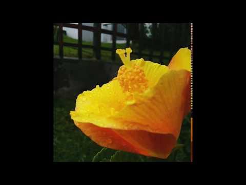 gif flor amarilla