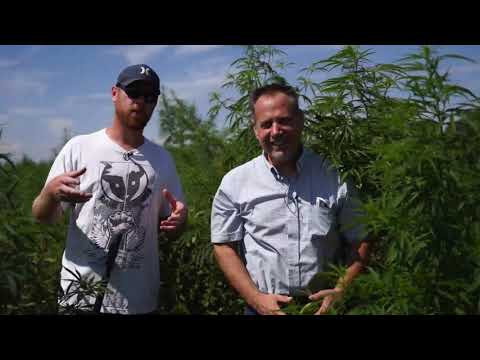 Inside A Colorado Hemp Farm: How Its Planted, What Type Of Food They Use,  & IPM For The Field,