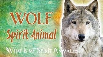 Wolf  Spirit Animal | Wolf  Totem & Power Animal | Wolf Symbolism & Meanings