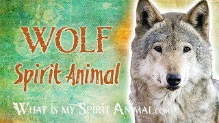 Wolf  Spirit Animal | Wolf  Totem & Power Animal | Wolf Symbolism & Meanings