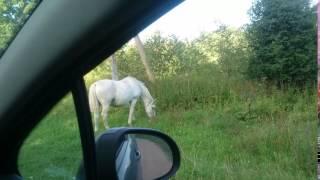 Конь, деревня Гороховище, Псковская область