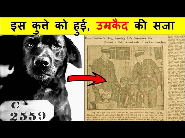 इसके मालिक ने इसे जेल भिजवा दिया, कारण जानकार चौंक जाओगे | The Dog Who Was Sentenced to Life Prison