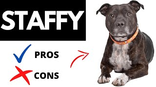 Staffordshire Bull Terrier Pros And Cons | The Good AND The Bad Of A STAFFY!!