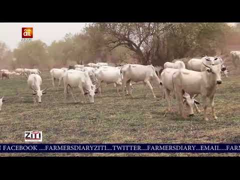 Farmers Diary grass cutter farm training youtube