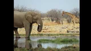 Саванны Африки