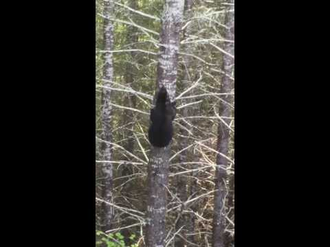 Ineffective & outdated: Six reasons to not hang a bear bag