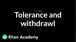 Tolerance and withdrawal | Processing the Environment | MCAT | Khan Academy