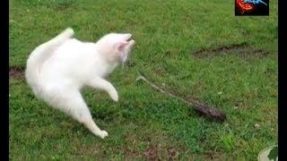 Кошка против змеи! Смешные видео - Cat vs snake! Funny videos