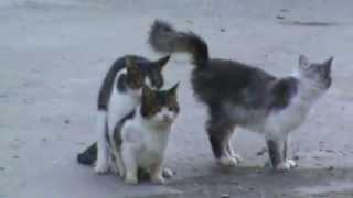 Эротика для котика