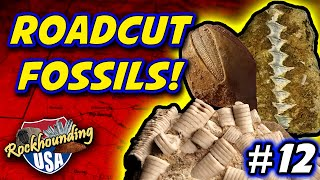 Episode 12:  Huge Variety Of Fossils From Route 146 Road-cut Near Anna, Illinois