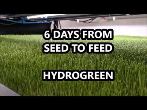 HydroGreen Seed Grow Harvest