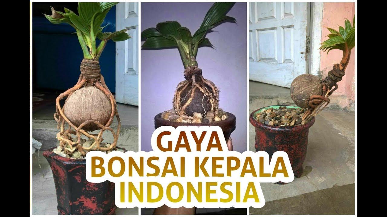 Logo Bonsai Kelapa Indonesia Blogger Bonsai
