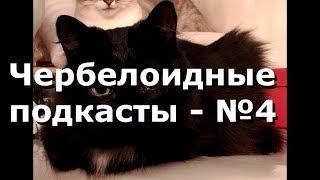 Чербелоидный подкаст #4 - Откуда у кошки испанская грусть