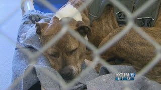 Pit Bull Kills Pomeranian On Portland Streetcar