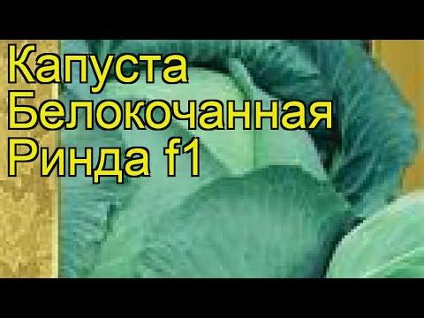 Капуста белокочанная Ринда f1. Краткий обзор, описание характеристик, где купить семена Rinda f1