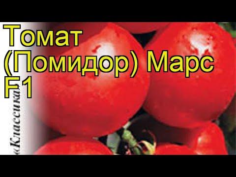 Томат Марс F1 (Томат). Краткий обзор, описание характеристик, где купить семена solánum lycopérsicum