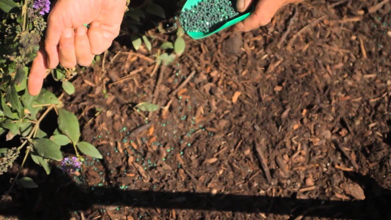 how do i apply starter fertilizer fall u0026 winter gardening tips