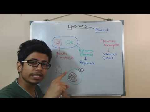 Episome | genomic DNA and plasmid in conjugation