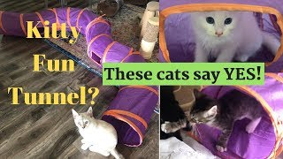 Cats Agree: Kitty Fun Tunnel is the BEST Cat toy EVER