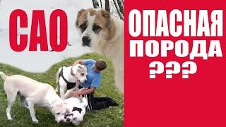 Потенциально опасные породы собак??? Или неадекватные владельцы? Часть 1