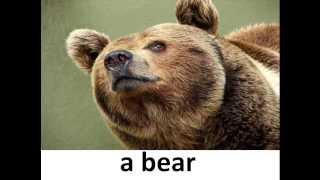 Урок английского - Животные