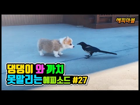 Dogs and Cat Funny Moments | Funny Animals Compilation #27 냥이와 댕댕이의 웃긴 영상모음 #27