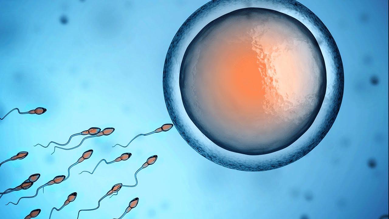 Resultado de imagem para fertilization