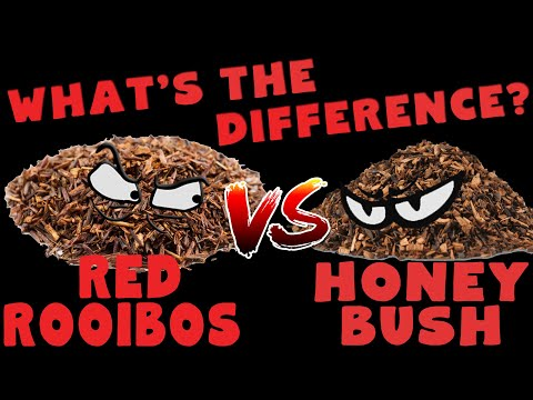 What is the difference between Red Rooibos & Honeybush tea?
