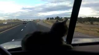 Trucker cat does not like the overpass