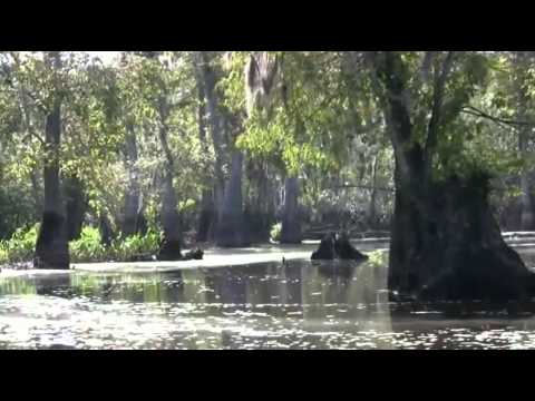 Run Through The Jungle (HD)