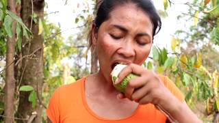 Finding food & meet Ripe mango for eat - Natural ripe mango for eating delicious #69