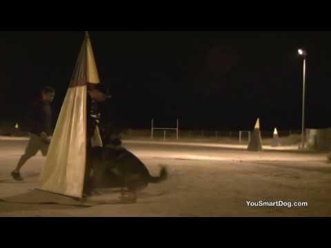 Schutzhund bloopers – Watch that line, moron!