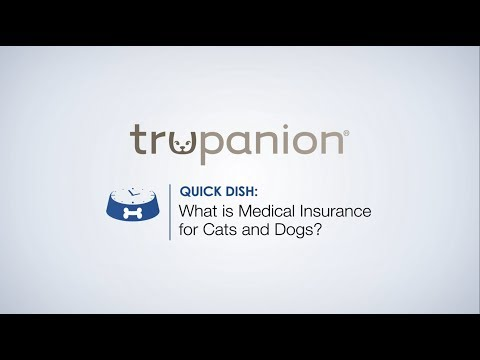 Quick Dish | Medical Insurance for Cats and Dogs