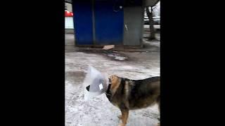 Собака-космонавт ©20181208