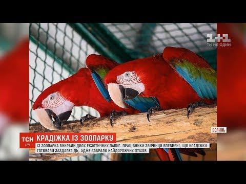 З Луцького зоопарку викрали двох екзотичних папуг