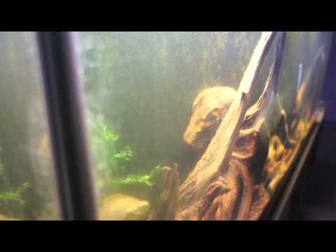 Infamous Review Announcement on Nualgi Aquarium The Algae Controller, Get Rid of Er, and Destroyer