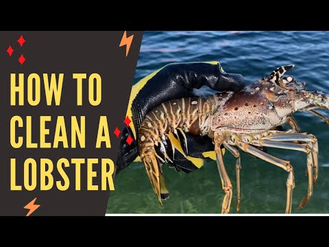 How to clean a Lobster