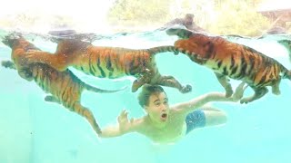 BABY TIGERS GO SWIMMING IN GIANT FRESHWATER LAGOON ! WHAT HAPPENS ?!