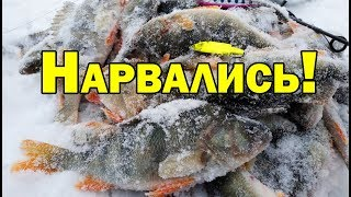 НЕ ЗРЯ ПРОБИВАЛИСЬ не первый лед рыбалка с ночевкой ВИБ В КОРЯГАХ