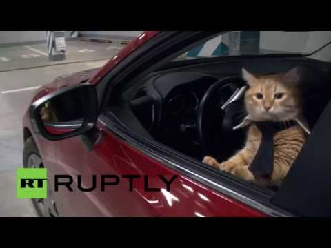 The day these kitties became office 'fat cats', Russia