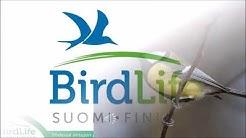 Talvilintukurssi osa 1/5 - BirdLife Suomi