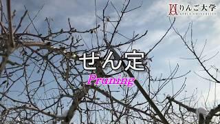 日本一のりんご産地・青森から、りんごの旬な情報をお届け! ブログ本編...