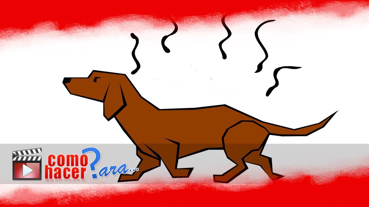 C mo quitar el olor a perro de los ambientes youtube - Como quitar el olor a cuero ...