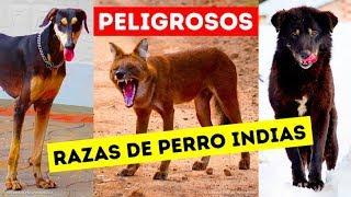 9 peligrosas razas de perros que los indios todavía mantienen como mascotas