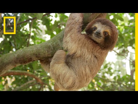 Rainforests 101 | National Geographic