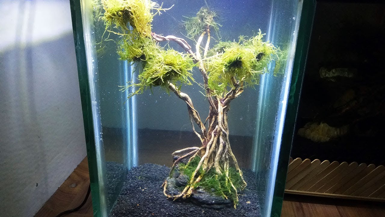 How To Make Aquascape Bonsai Underwater Tree For Aquascape Decoration Youtube