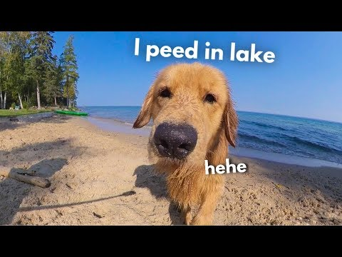 My Dog Rents A Beach House | Family Vacation