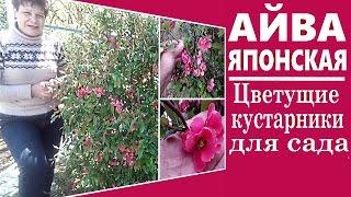 видео Группы растений по декоративным качествам